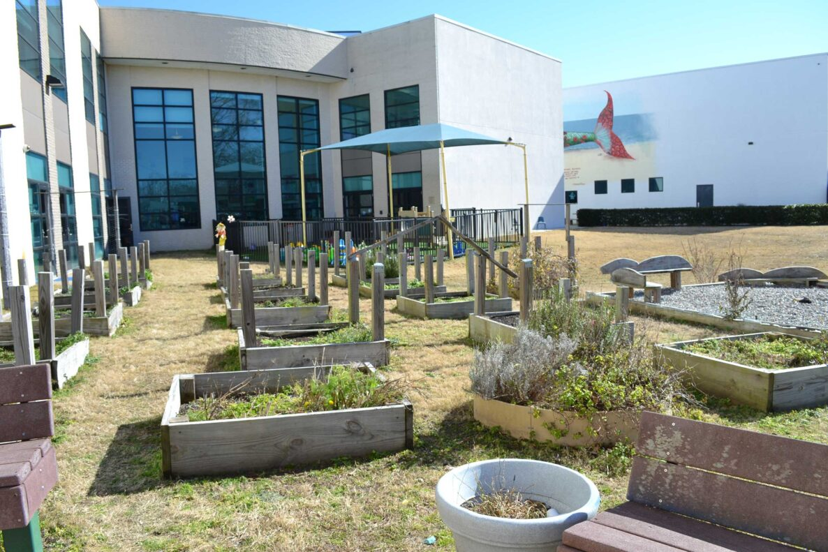 A lawn full of a bunch of grasses in a Jewish Day school Norfolk VA